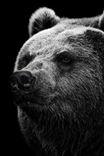L'ours noir iPhone fonds d'écran