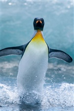 Antarctique pingouin iPhone fonds d'écran