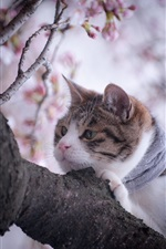Chat dans l'arbre, printemps iPhone fonds d'écran
